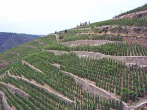 Steep vineyards Hermitage